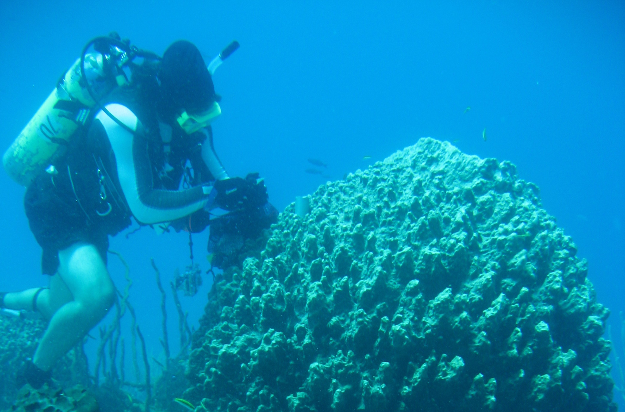 Jan dives on reef with sponges