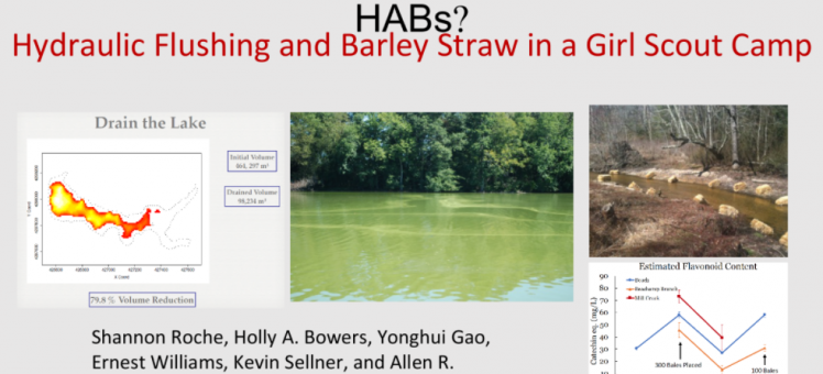 hydraulic flushing and barley straw in a girl scout camp to combat harmful algae blooms