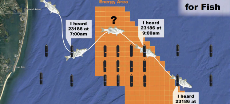 map with image fo fish going through an orange zone