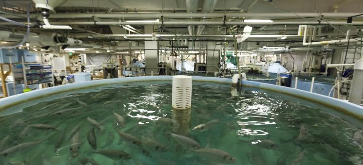 fish in a tank in the Aquaculture Research Center