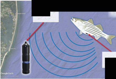 map with image of fish and receiver
