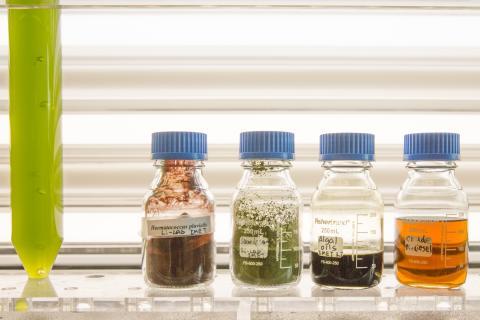 vials of green, brown, and orange algae