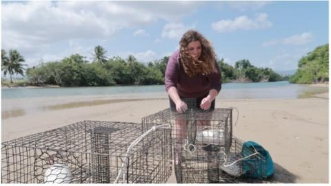 Olivia arranges cages on a beach