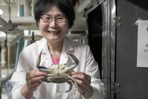 Sook Chung holds a blue crab in a lab