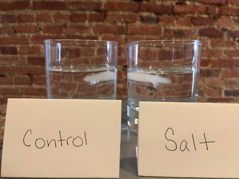 two glasses of water with ice. One labeled control and one labeled salt