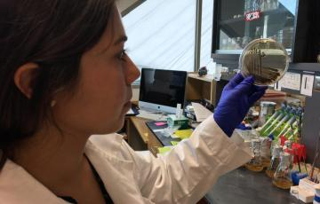 Daniela Tizabi studies giant barrel sponge microbes in the lab