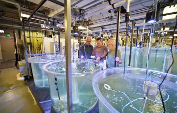 Jorge Gomezjurado and two other scientists stand at a tank in the Aquaculture Research Center