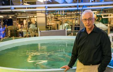 Dr. Yonathan Zohar stands by an indoor tank with fish