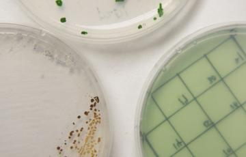 plates of green, yellow, and brown algae